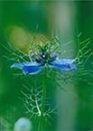 103-春陽の香り