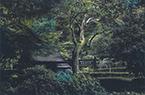 119-薬師池の木