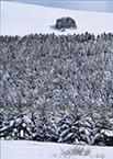 52-雪原の樹林