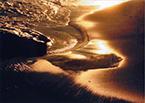 11-金色の波紋