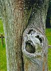 116-樹木の叫び