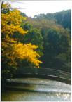 仲秋の薬師池