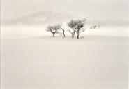 凍空の雪原