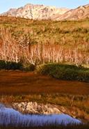 晩秋の栂池