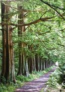思い出の並木道